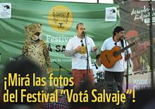 © Mirá las fotos de Festival Votá Salvaje