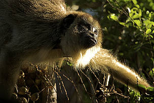 © Los bosques, que contienen el 65 % de la diversidad biológica terrestre del planeta