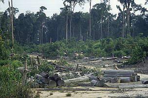/ ©:  Bosques sin árboles. Hace falta que se implemente de manera efectiva la Ley de Bosques.