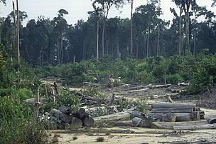 © 20% de las emisiones globales de los gases de efecto invernadero provienen de la deforestación y la degradación de bosques