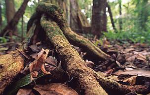 / ©: El fondo de la Ley de Bosques sirve para retribuir a los productores y a las provincias que conservan sus bosques