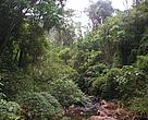 Bosque de la Argentina