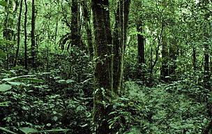 © La suma asignada por el proyecto de Ley de Presupuesto 2012 para la protección de los bosques nativos sería aproximadamente 5 a 7 veces menor a lo establecido en la legislación vigente.