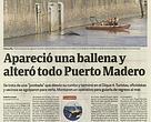 Clarin - Apareció una ballena en Puerto Madero
