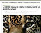 La muerte de un jaguar por atropello en Argentina enciende las alarmas por extinción - Agencia EFE