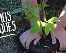 Nos plantamos por los bosques