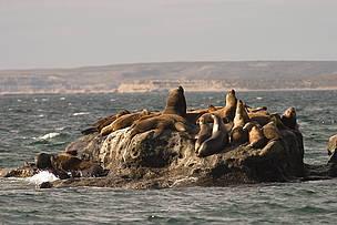 © Apostadero de lobos marinos en la zona de restingas de Punta Alt.