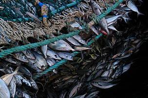 © La pesca es una de las principales actividades económicas de nuestro país