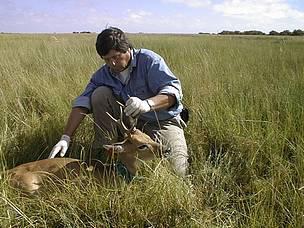 © El equipo de Vida Silvestre trabajando por la conservación del Venado de las Pampas