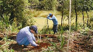 © Reforestaciones en márgenes de arroyos