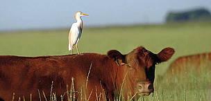 © Ganadería sustentable: producir y conservar son compatibles