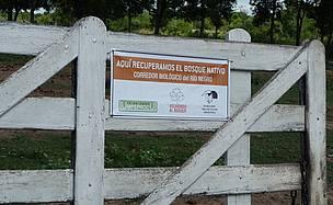 / ©: La restauración de bosques nativos ayuda a conservar la biodiversidad.